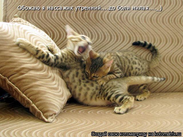 Котоматрица: Обожаю я массажик утренний....до боли милая...._)