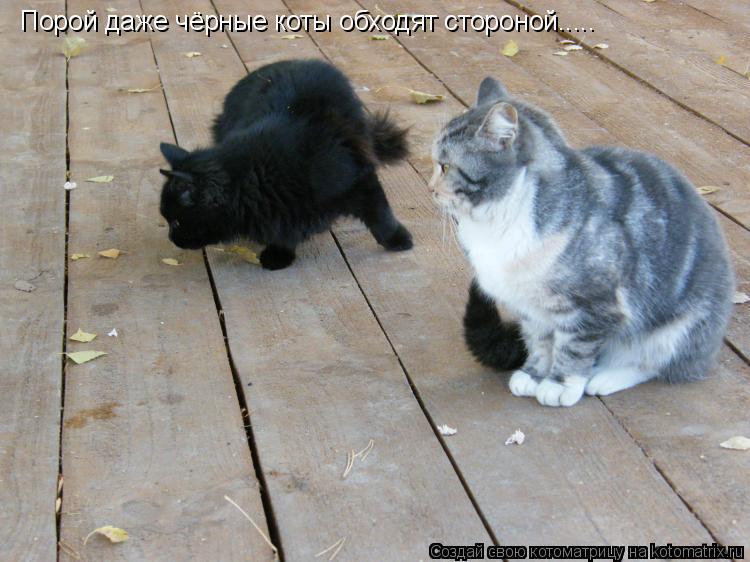 Котоматрица: Порой даже чёрные коты обходят стороной.....