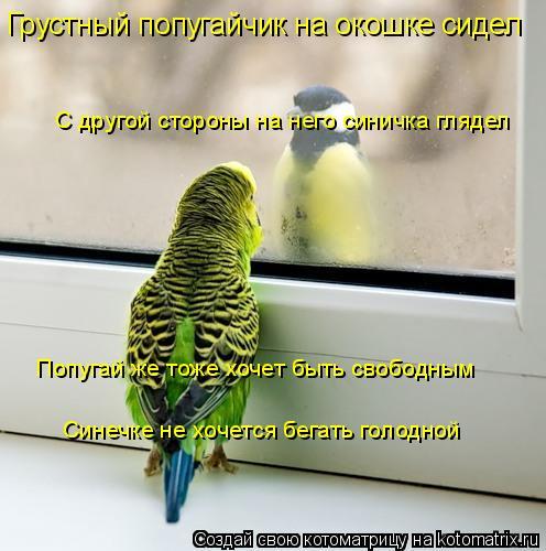 Котоматрица: Грустный попугайчик на окошке сидел С другой стороны на него синичка глядел Попугай же тоже хочет быть свободным Синечке не хочется бегать