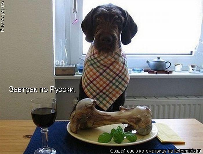 Котоматрица: Завтрак по Русски.