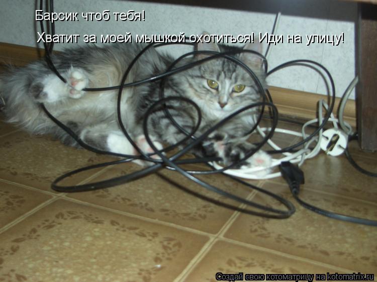 Котоматрица: Барсик чтоб тебя! Хватит за моей мышкой охотиться! Иди на улицу!