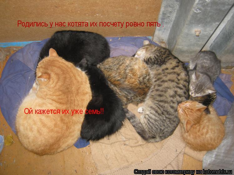 Котоматрица: Родились у нас котята их посчету ровно пять . Ой кажется их уже семь!!