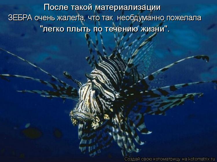"""Котоматрица: ЗЕБРА очень жалела, что так  необдуманно пожелала После такой материализации """"легко плыть по течению жизни""""."""