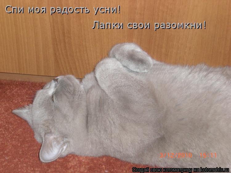 Котоматрица: Спи моя радость усни! Лапки свои разомкни!