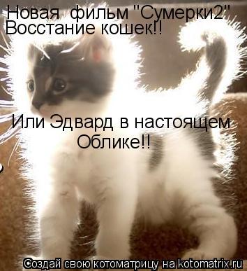 """Котоматрица: Новая  фильм """"Сумерки2"""" Восстание кошек!! Или Эдвард в настоящем Облике!!"""