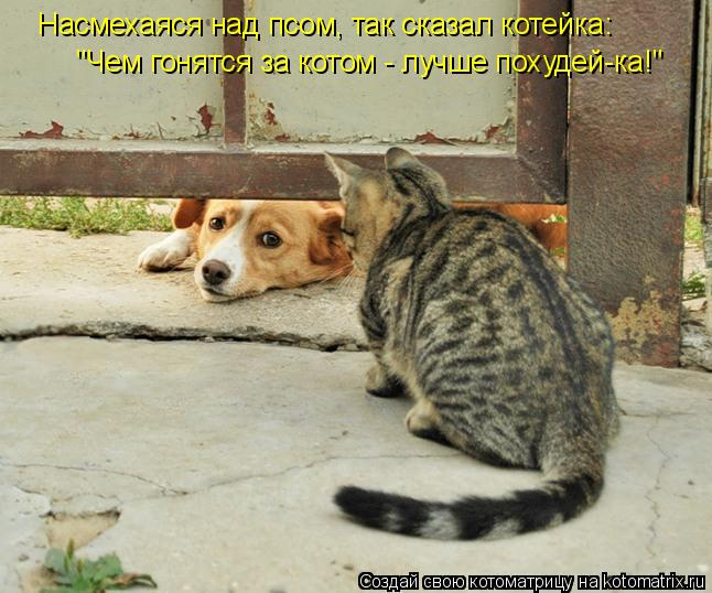 """Котоматрица: Насмехаяся над псом, так сказал котейка: """"Чем гонятся за котом - лучше похудей-ка!"""""""