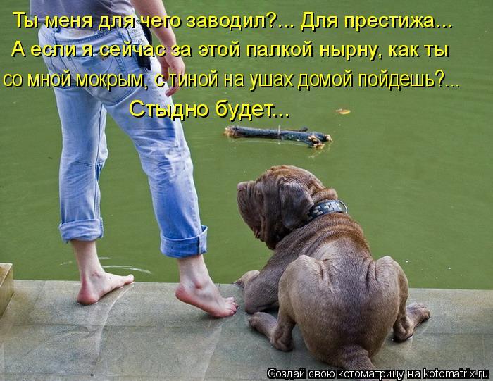 http://kotomatrix.ru/images/lolz/2010/12/04/756407.jpg