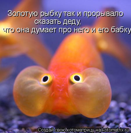 Котоматрица: Золотую рыбку так и прорывало  сказать деду,  что она думает про него и его бабку
