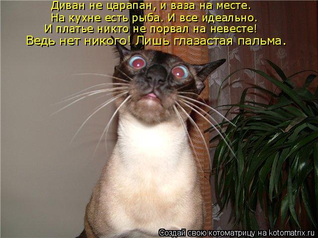 Котоматрица: Диван не царапан, и ваза на месте. На кухне есть рыба. И все идеально. И платье никто не порвал на невесте! Ведь нет никого! Лишь глазастая пал