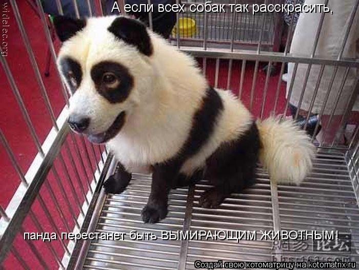Котоматрица: А если всех собак так расскрасить, панда перестанет быть ВЫМИРАЮЩИМ ЖИВОТНЫМ!