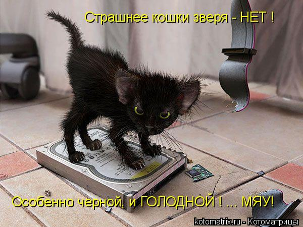 Котоматрица: Страшнее кошки зверя - НЕТ ! Особенно черной, и ГОЛОДНОЙ ! ... МЯУ!