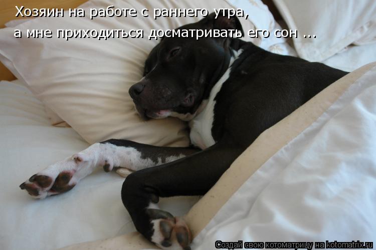 Котоматрица: Хозяин на работе с раннего утра, а мне приходиться досматривать его сон ...