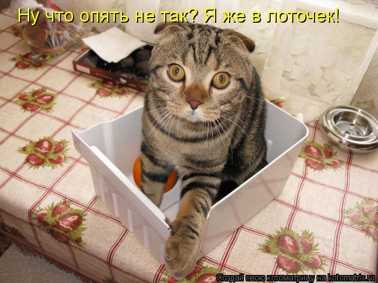 Котоматрица: Ну что опять не так? Я же в лоточек!