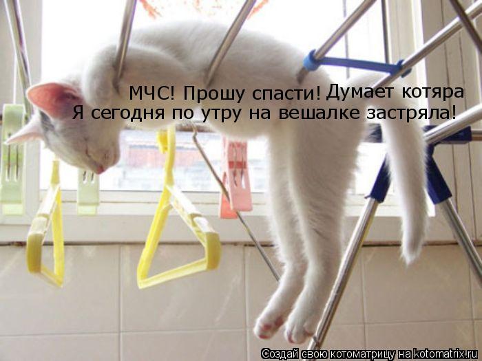 Котоматрица: МЧС! Прошу спасти! Думает котяра Я сегодня по утру на вешалке застряла!