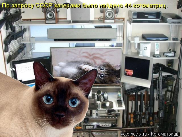 Котоматрица: По запросу СССР хакерами было найдено 44 котоматриц.