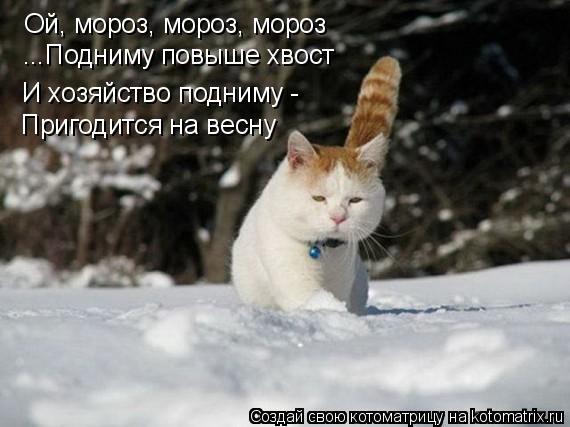 Котоматрица: Ой, мороз, мороз, мороз ...Подниму повыше хвост И хозяйство подниму -  Пригодится на весну