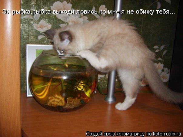 Котоматрица: Эй рыбка,рыбка выходи ловись ко мне я не обижу тебя...