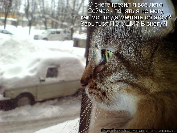 Котоматрица: О снеге грезил я все лето. Сейчас - понять я не могу, как мог тогда мечтать об этом? Зарыться ПО УШИ? В снегу?!