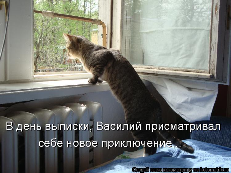Котоматрица: В день выписки, Василий присматривал себе новое приключение...