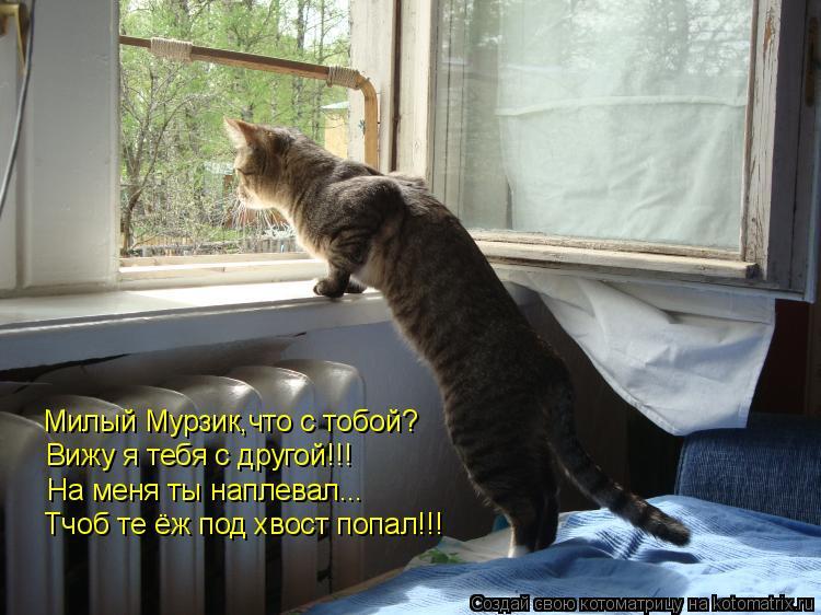 Котоматрица: Милый Мурзик,что с тобой? Вижу я тебя с другой!!! На меня ты наплевал... Тчоб те ёж под хвост попал!!!