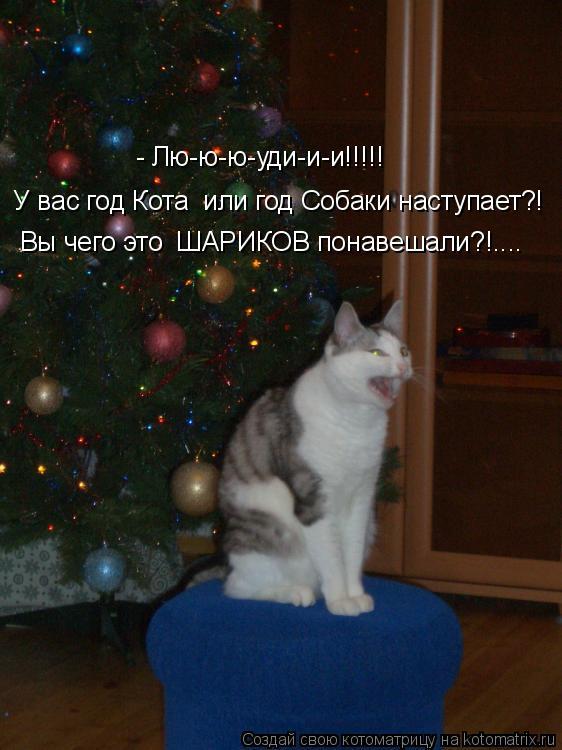 Котоматрица: Вы чего это  ШАРИКОВ понавешали?!....  У вас год Кота  или год Собаки наступает?! - Лю-ю-ю-уди-и-и!!!!!