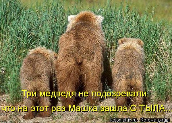 Котоматрица: Три медведя не подозревали, что на этот раз Машка зашла С ТЫЛА...