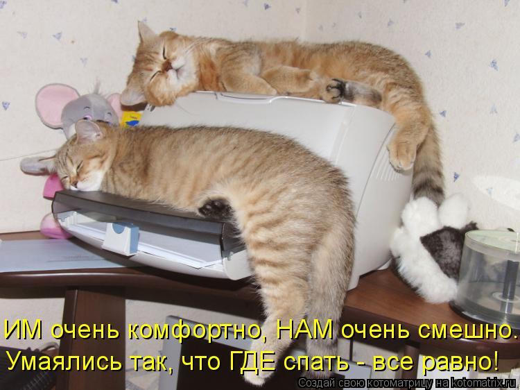 Котоматрица: ИМ очень комфортно, НАМ очень смешно. Умаялись так, что ГДЕ спать - все равно!