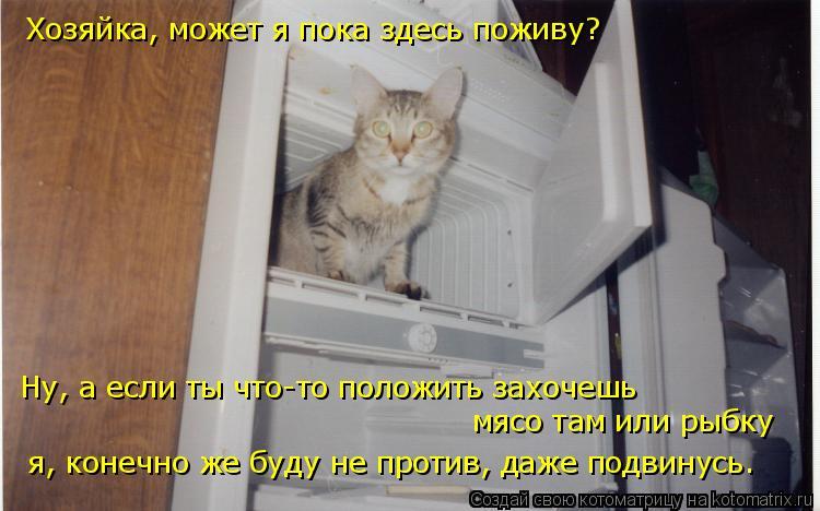 Котоматрица: Хозяйка, может я пока здесь поживу? Ну, а если ты что-то положить захочешь мясо там или рыбку я, конечно же буду не против, даже подвинусь.