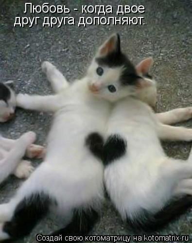 Котоматрица: Любовь - когда двое друг друга дополняют.