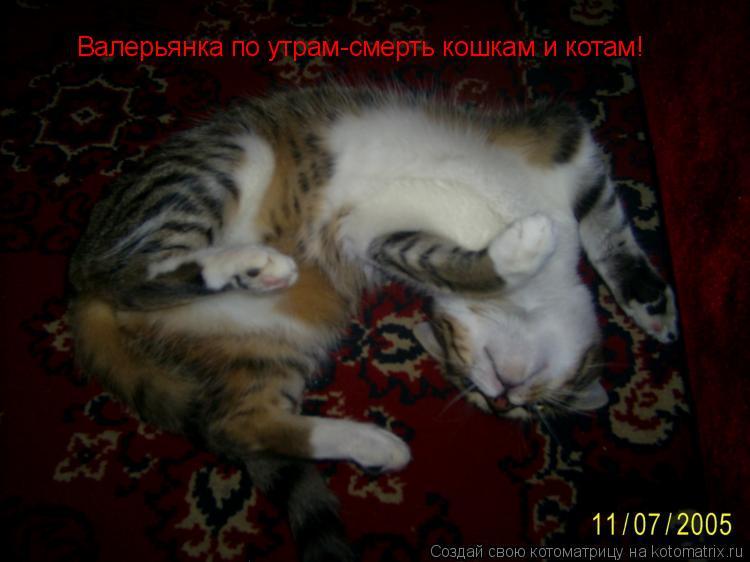 Котоматрица: Валерьянка по утрам-смерть кошкам и котам!