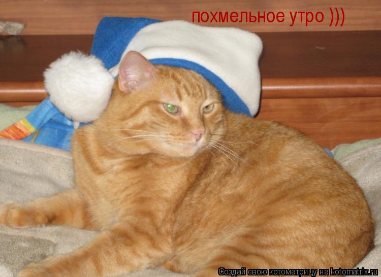 Котоматрица: похмельное утро )))