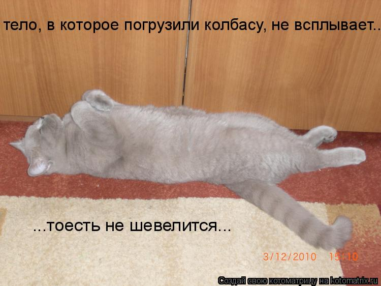Котоматрица: тело, в которое погрузили колбасу, не всплывает... ...тоесть не шевелится...