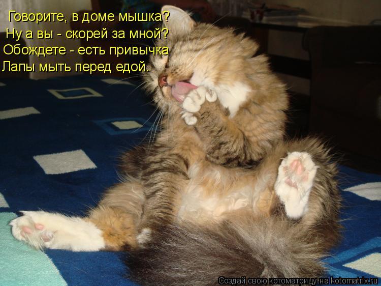 Котоматрица: Говорите, в доме мышка? Ну а вы - скорей за мной? Обождете - есть привычка Лапы мыть перед едой.