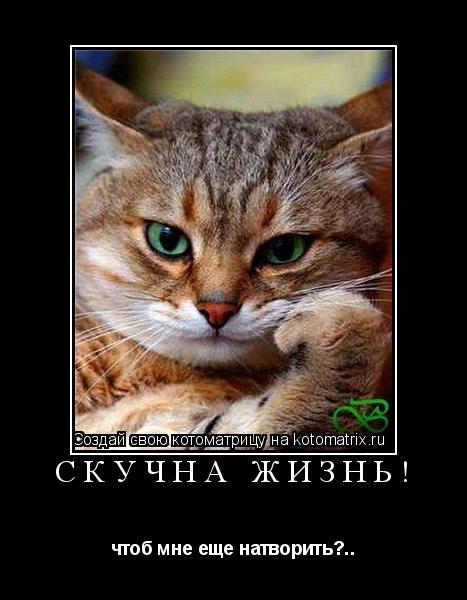 Котоматрица: Скучна жизнь! чтоб мне еще натворить?..