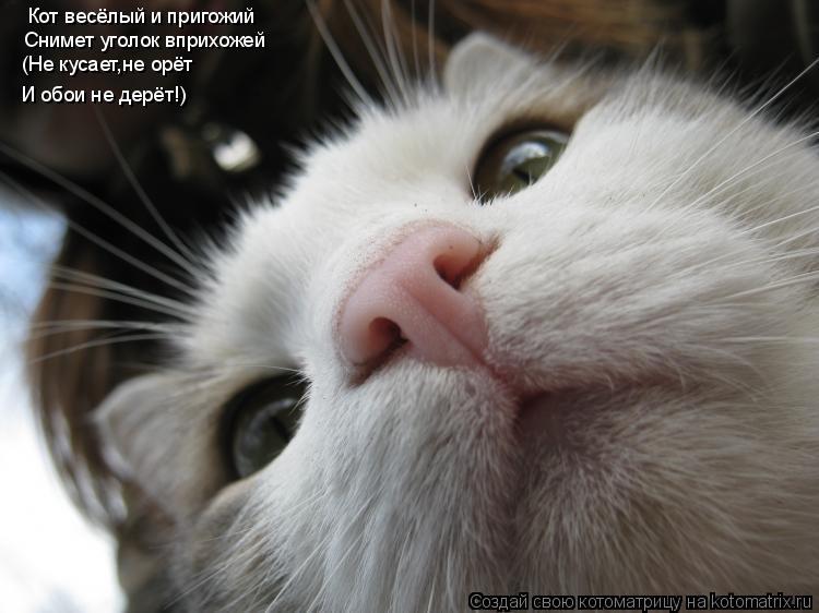 Котоматрица: Кот весёлый и пригожий Снимет уголок вприхожей (Не кусает,не орёт И обои не дерёт!)