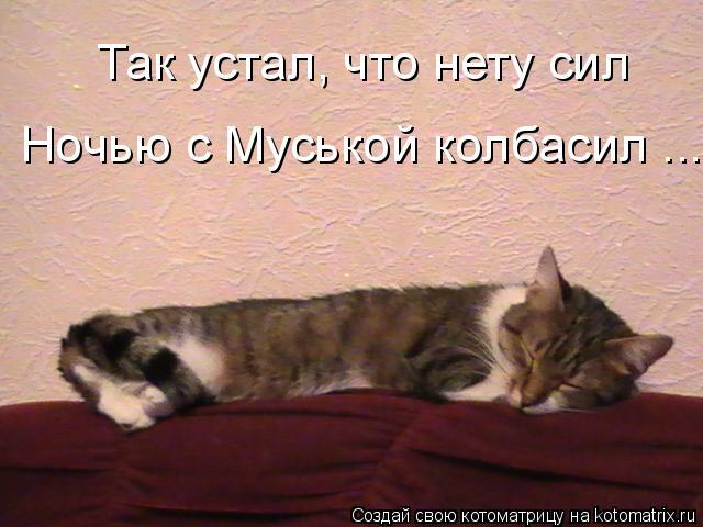 Котоматрица: Так устал, что нету сил Ночью с Муськой колбасил ...