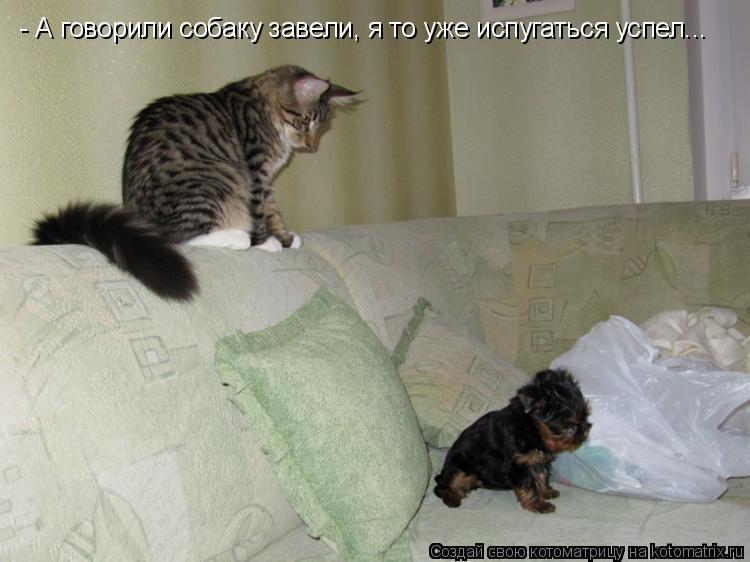 Котоматрица: - А говорили собаку завели, я то уже испугаться успел...