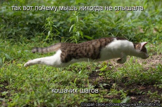 Котоматрица: так вот почему мышь никогда не слышала  кошачих шагов