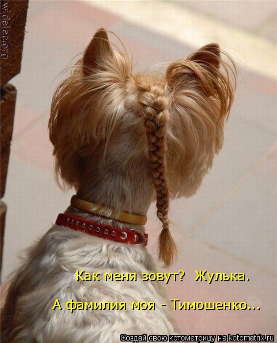 Котоматрица: Как меня зовут?  Жулька. А фамилия моя - Тимошенко...
