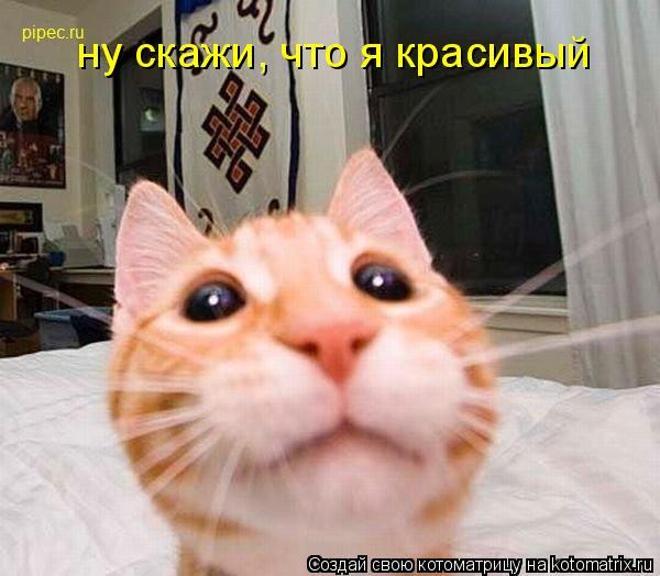 Котоматрица: ну скажи, что я красивый