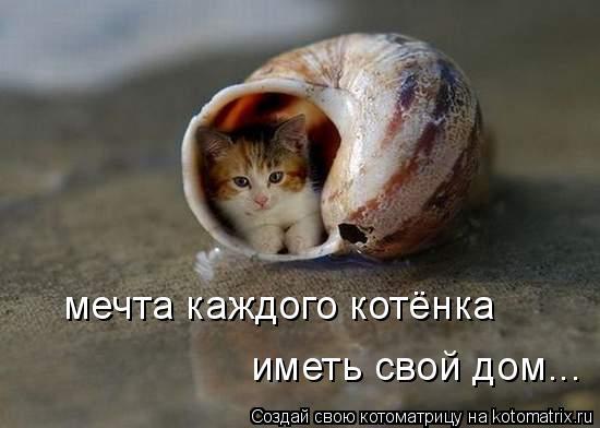 Котоматрица: мечта каждого котёнка иметь свой дом...