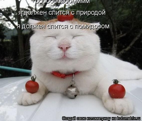 Котоматрица: оооооооооомммм я должен слится с природой я должен слится с помидором