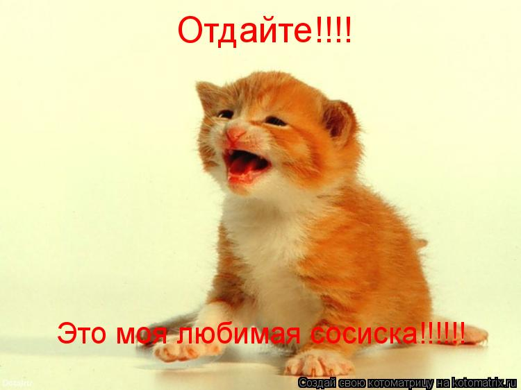 Котоматрица: Отдайте!!!! Это моя любимая сосиска!!!!!!