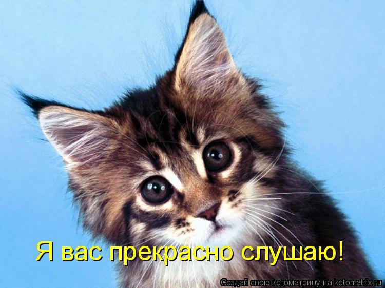 Котоматрица: Я вас прекрасно слушаю!