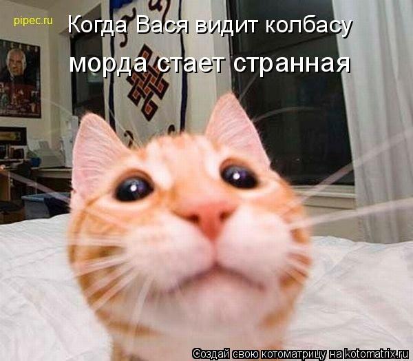 Котоматрица: Когда Вася видит колбасу морда стает странная