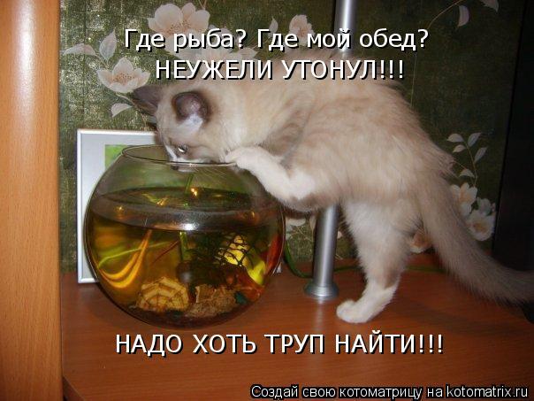 Котоматрица: НАДО ХОТЬ ТРУП НАЙТИ!!! Где рыба? Где мой обед?  НЕУЖЕЛИ УТОНУЛ!!!