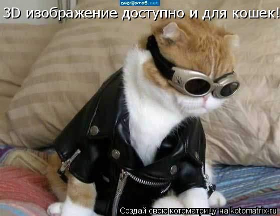 Котоматрица: 3D изображение доступно и для кошек!