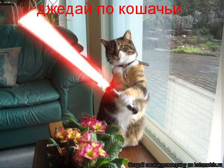 Котоматрица: джедай по кошачьи