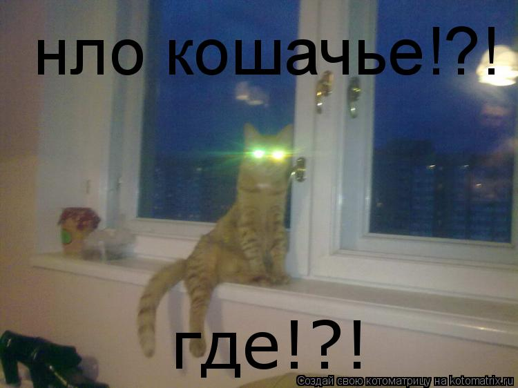 Котоматрица: нло кошачье!?! где!?!