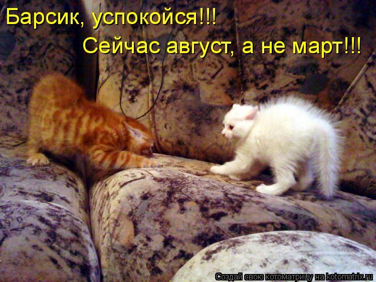 Котоматрица: Барсик, успокойся!!! Сейчас август, а не март!!!